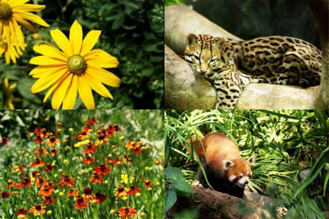 nature wallpaper with animals. A large collection of nature wallpaper pictures. Flowers, animals, nature